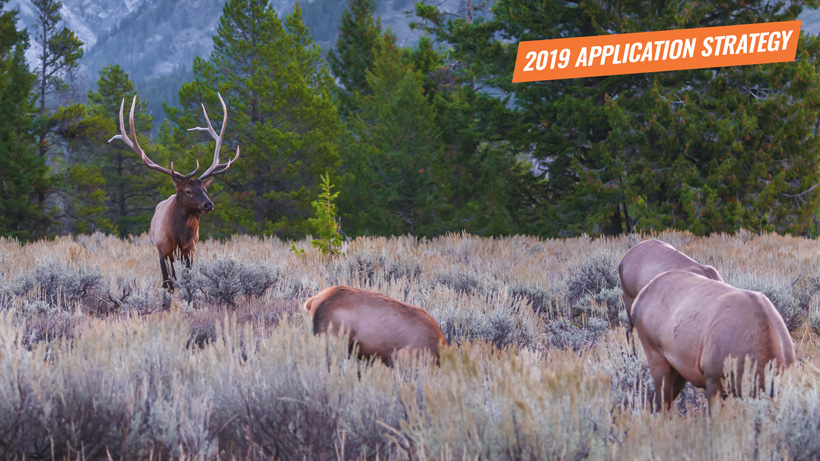 2019 Wyoming elk application strategy article