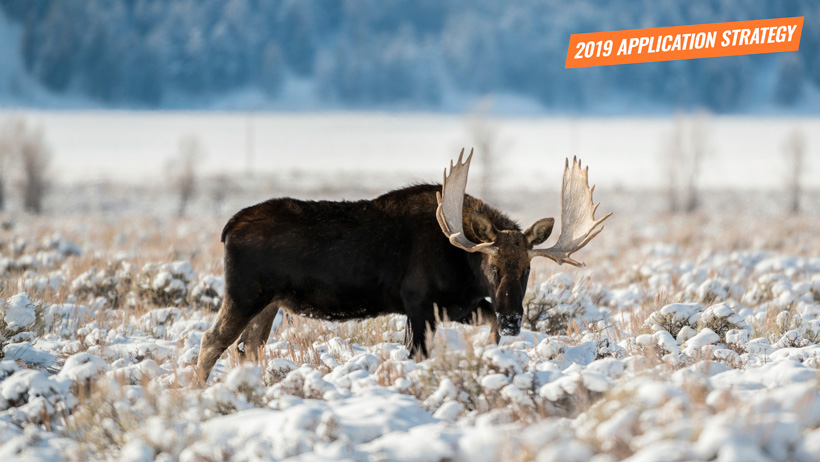 2019 Wyoming moose sheep mountain goat bison application strategy article