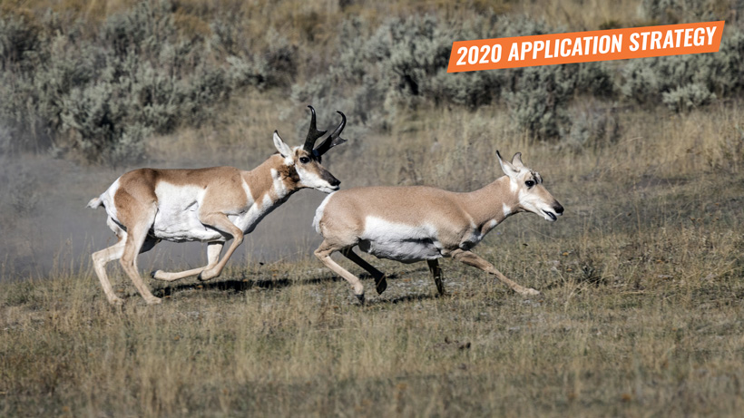 2020 Arizona antelope application strategy article