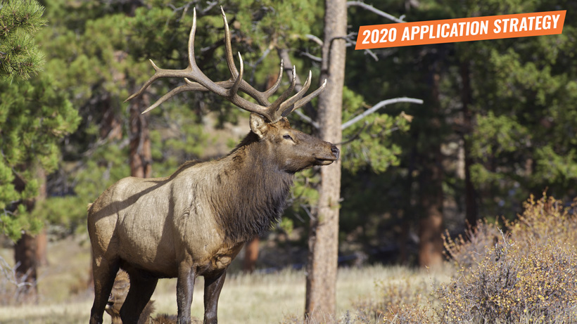 2020 Arizona elk application strategy article