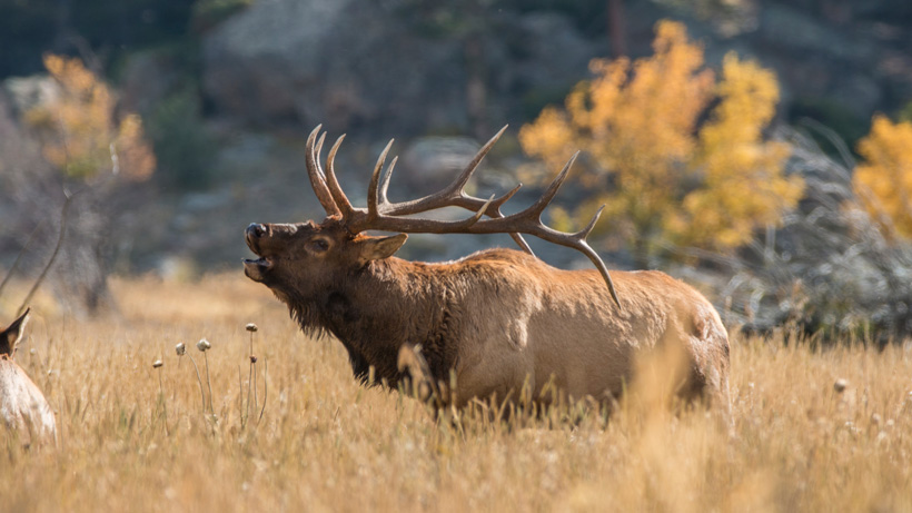 2020 Idaho second controlled hunt application period