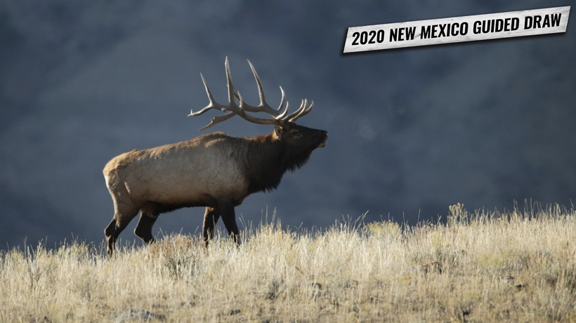 2020 New Mexico guided draw