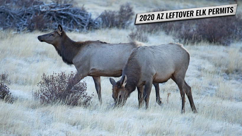 2020 leftover Arizona elk permit list