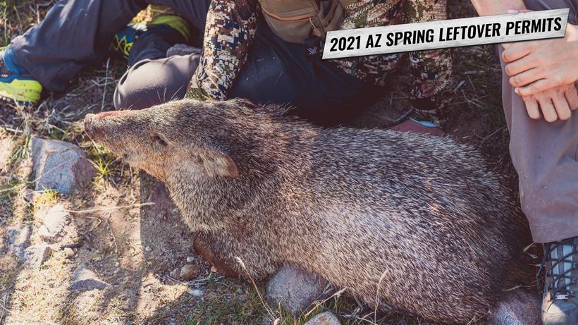 2021 Arizona spring leftover hunting permits
