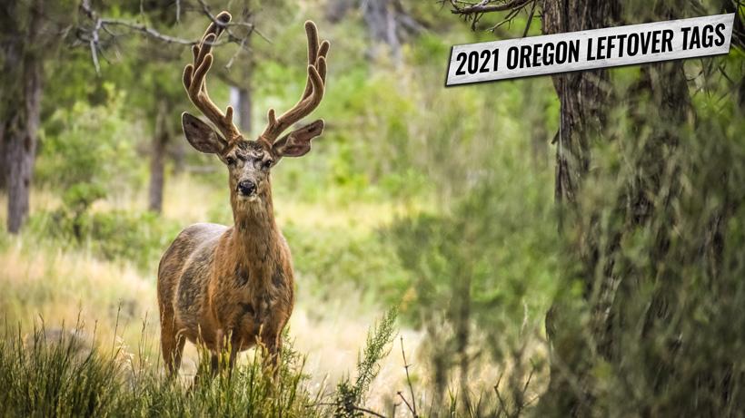 2021 Oregon leftover deer and elk tag list