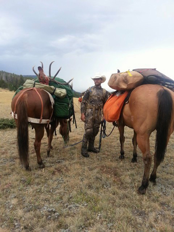 Packing elk on the horses