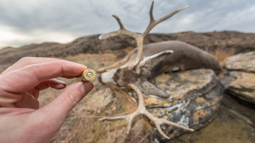 .338 edge rifle on mule deer
