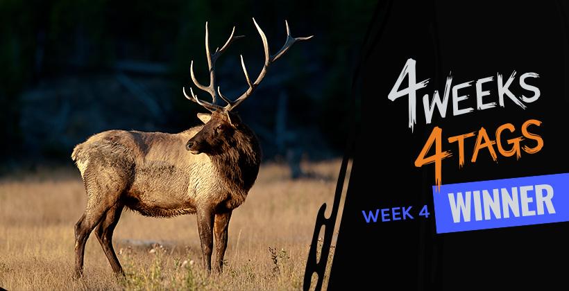 4W4T Landowner Elk Tag Week Four Winner