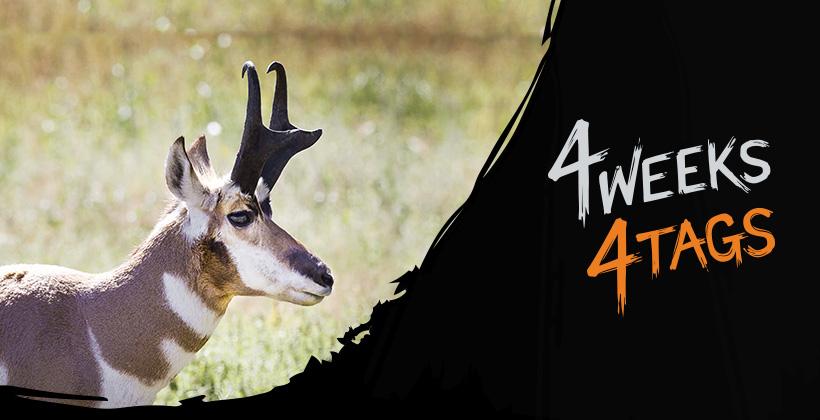 4 Weeks 4 Tags INSIDER landowner antelope tag giveaway