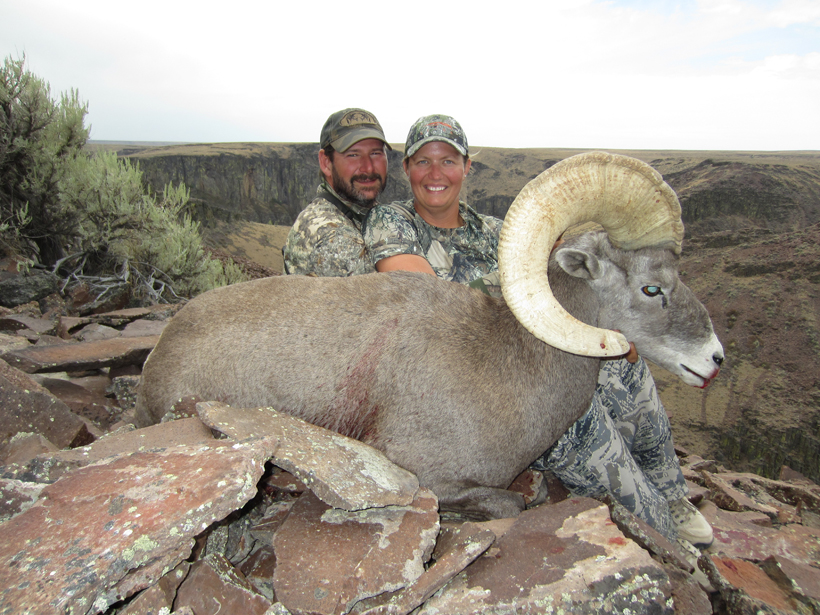 Bighorn sheep harvest