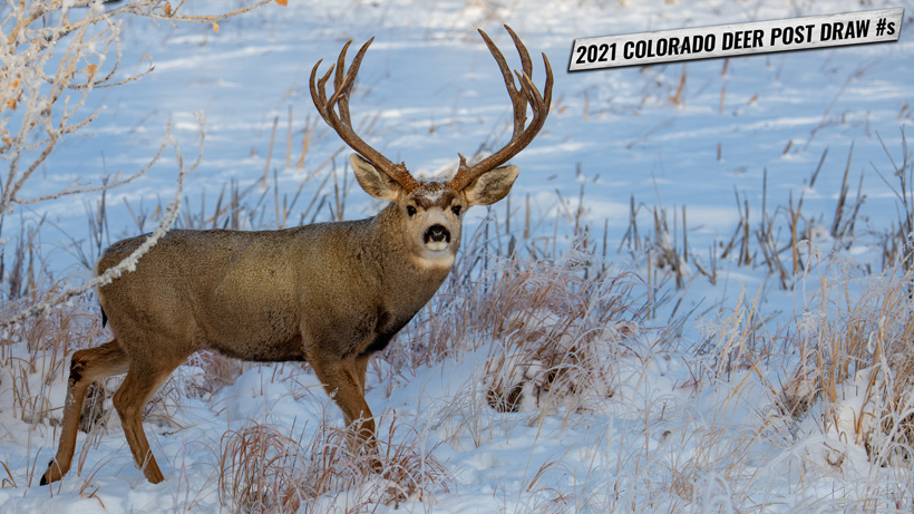 A look at app numbers and point creep after 2021 Colorado deer draw