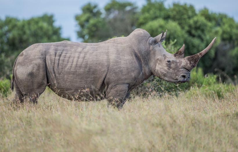 Africa big five import ban