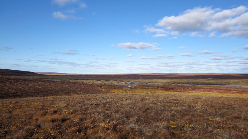 Alaska tundra caribou habitat