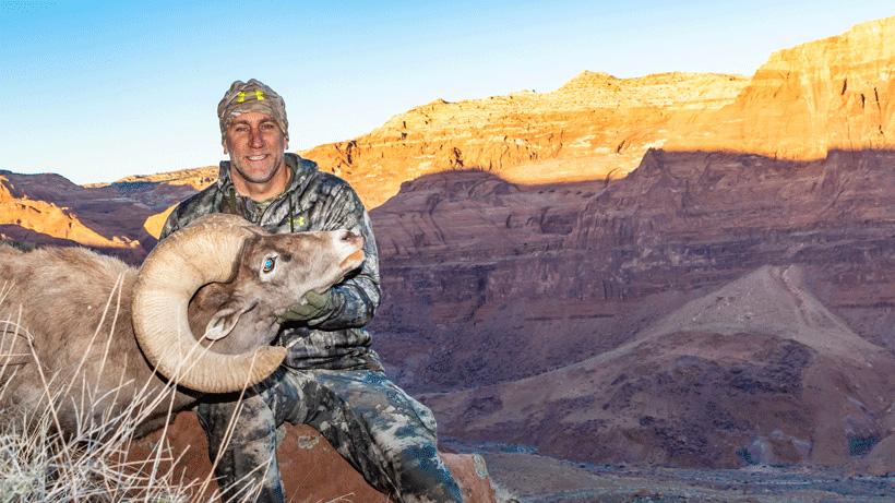Andrew Sarat Desert bighorn