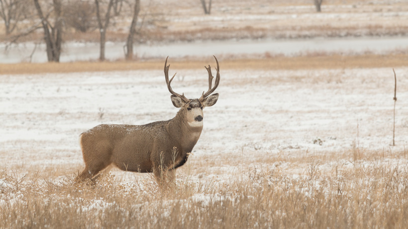 Another confirmed case of CWD in Region 6