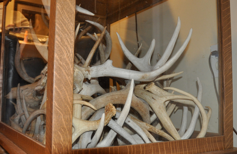 Antler shadow box