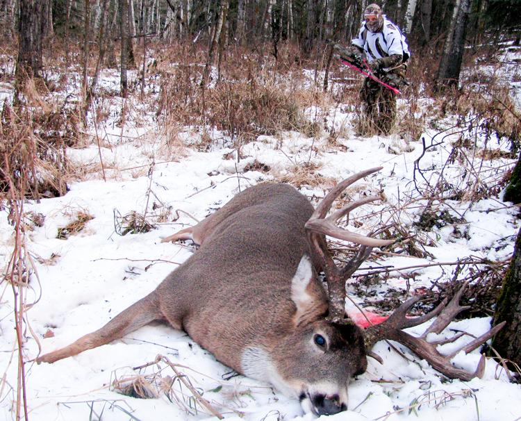 Approaching buck cautiously