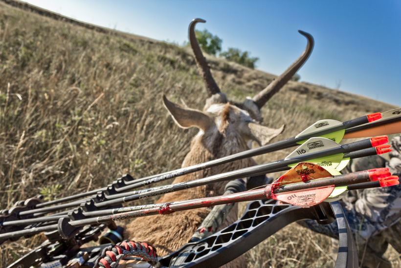Archery antelope hunting success