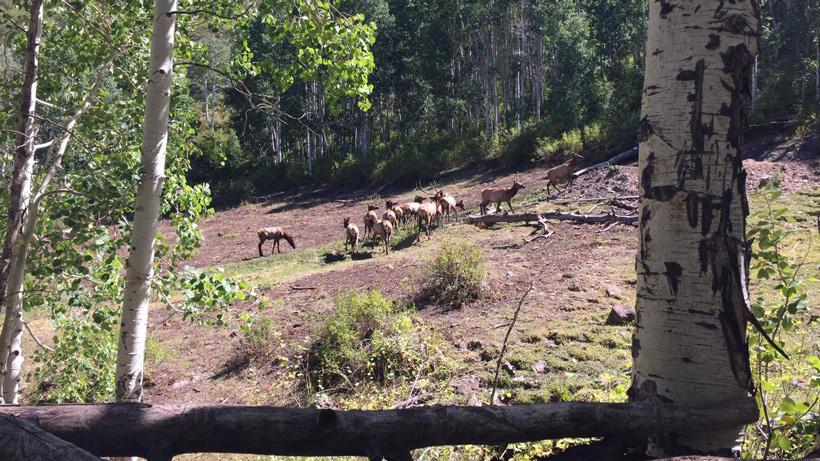 Archery hunting for elk in Utah