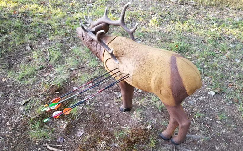 Archery practice for elk