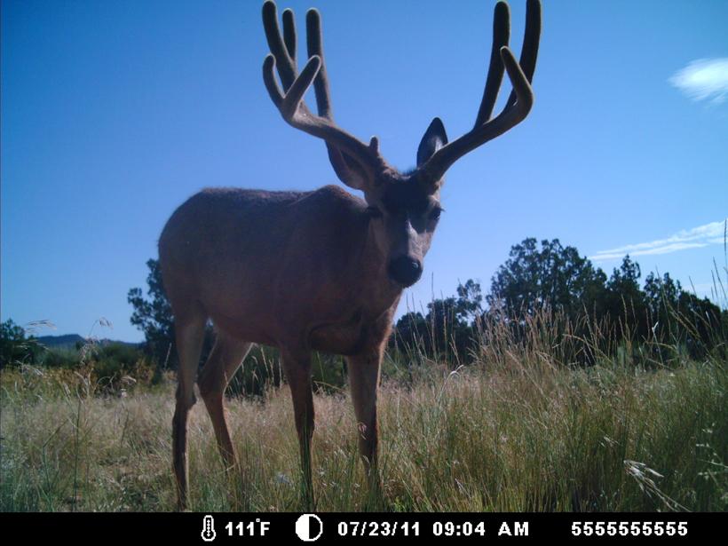 Arizona Strip trail camera 2