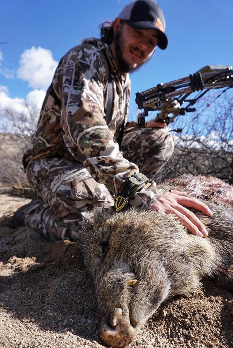 Arizona archery javelina