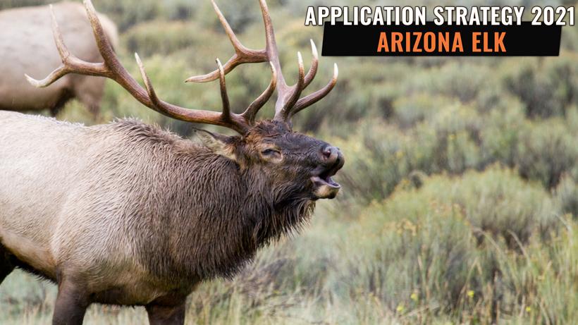 Application Strategy 2021: Arizona Elk