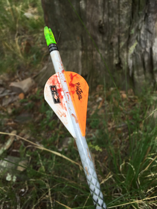 Arrow that was not a fatal hit on a Coues deer