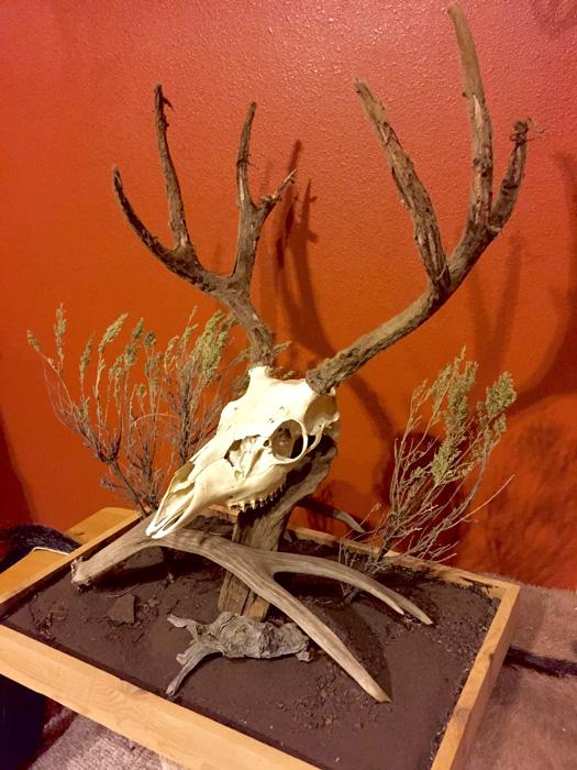 Austin Folkmans Oregon archery mule deer mount