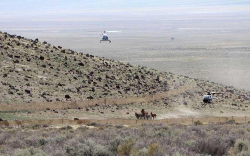 BLM wild horse roundup