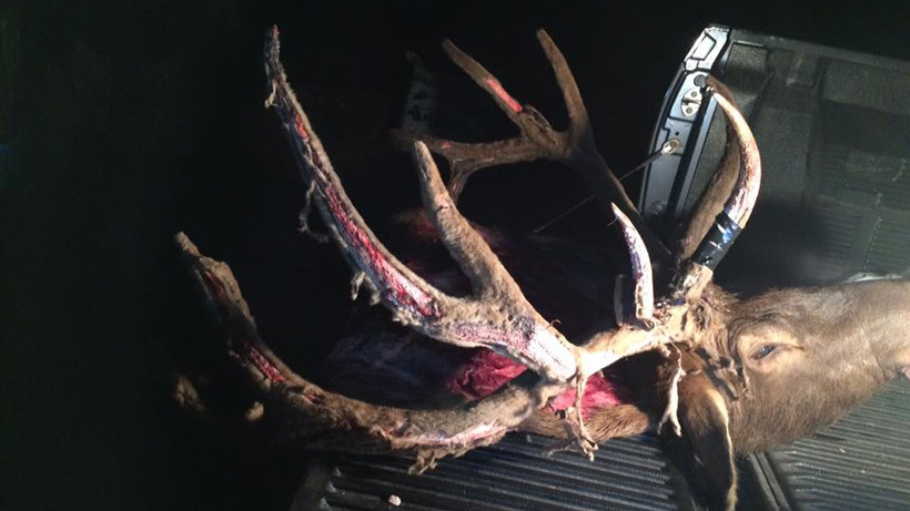 Back at the truck with a velvet Utah archery bull elk