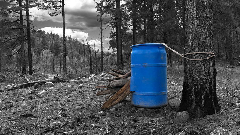 Bait barrel for black bears in Arizona