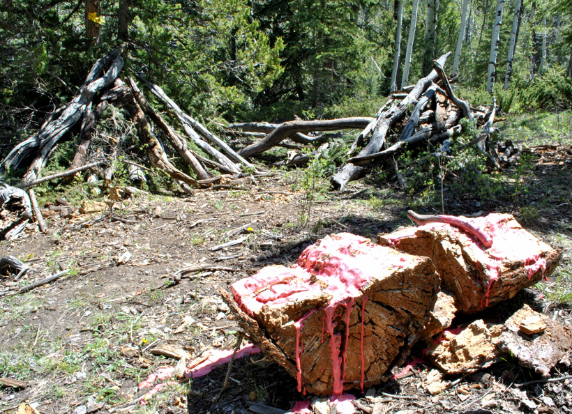 Bear bait site
