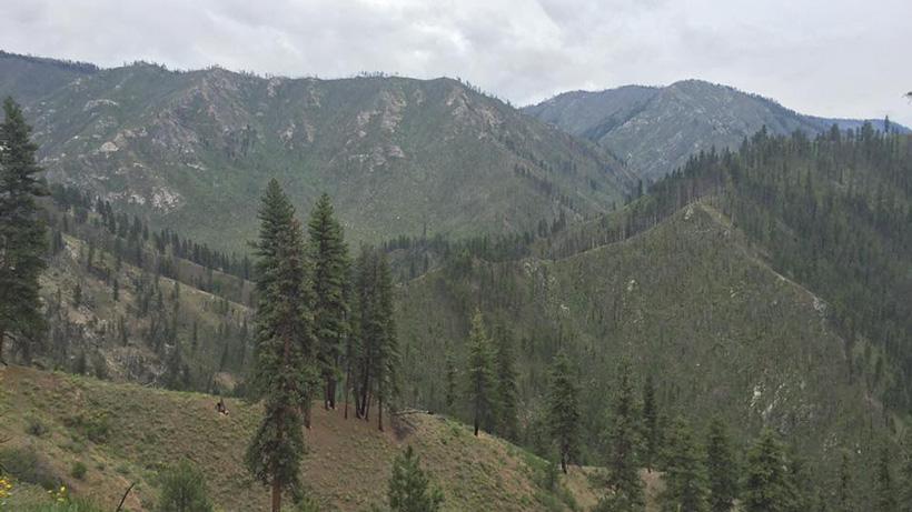 Bear hunting scenery in Idaho
