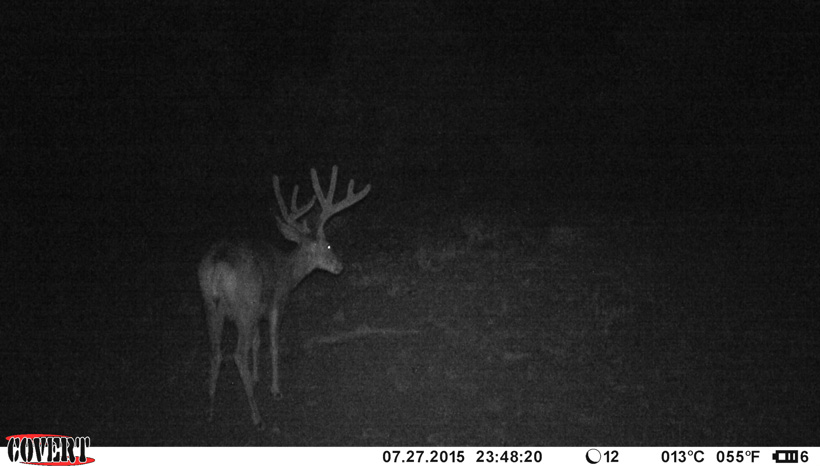 Ben Dettamanti buck on trail camera