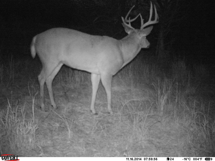 Big eight point whitetail buck post rut