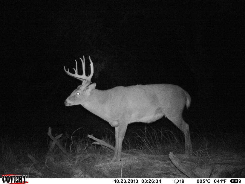 Big Ten whitetail buck in 2013