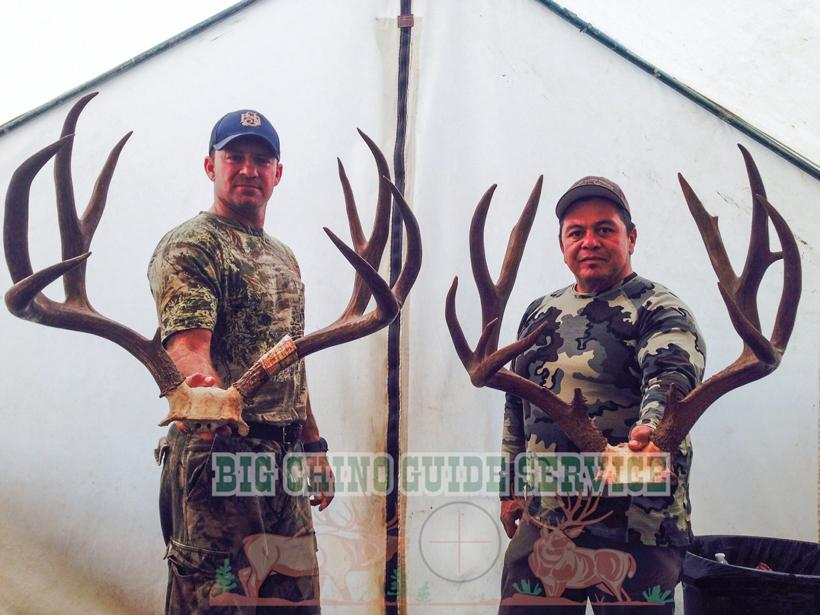 Pair of big Arizona over-the-counter mule deer bucks