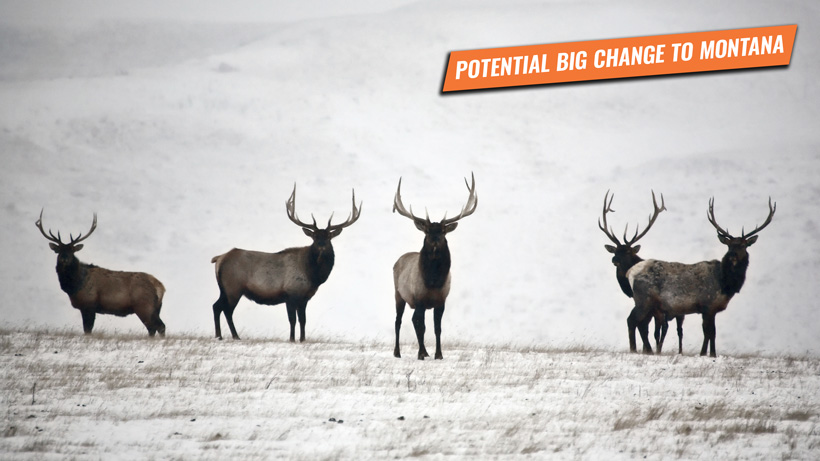 Bill to give 60 percent of Montana nonresident tags to outfitters