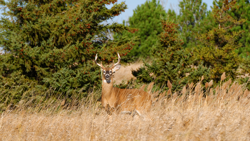 Could bleach be a solution to CWD in deer?