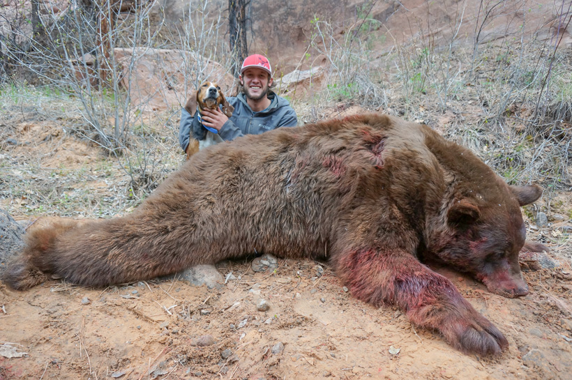 Bowdy Steele with his giant Utah black bear and one of the hounds