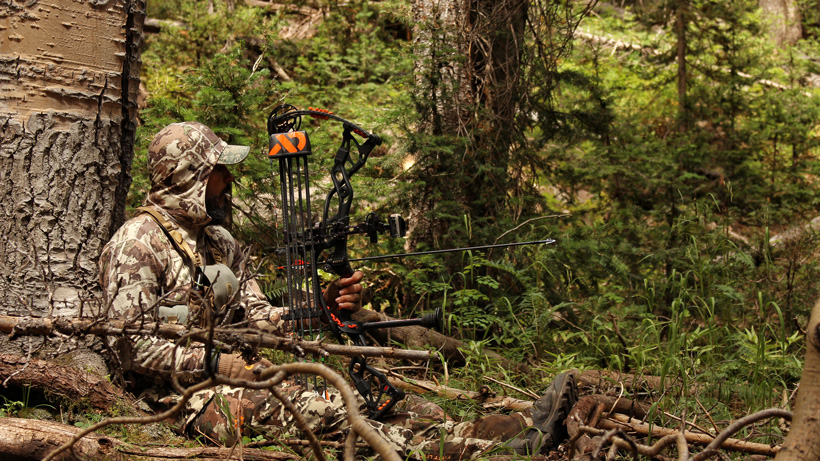 Bowhunting elk in thick timber