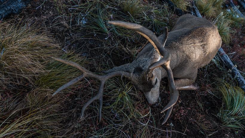 Brady Miller over the counter mule deer buck