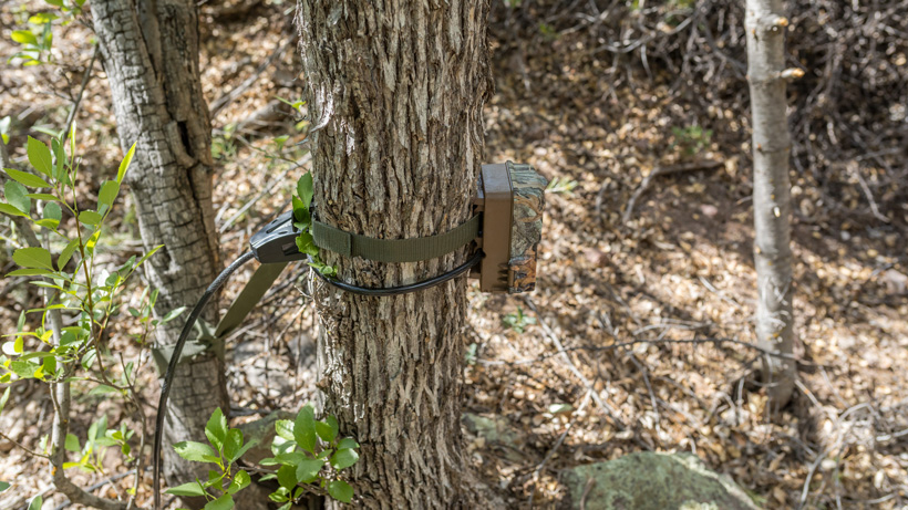 Browning trail camera placed to low on tree