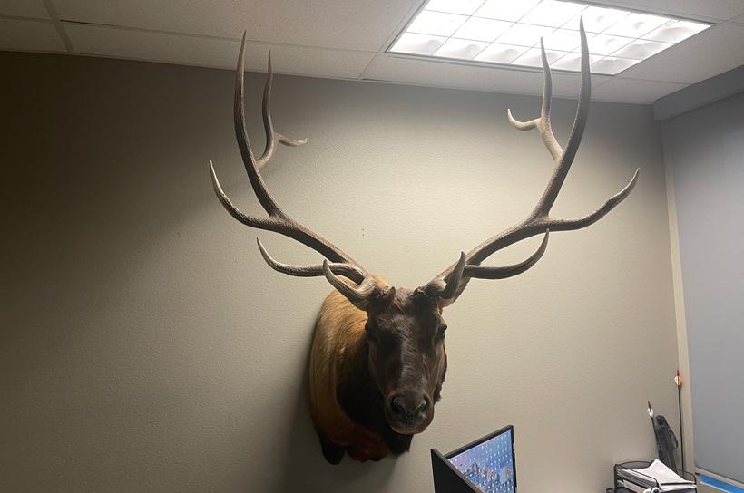 Bryan Campos Colorado OTC bull elk mount