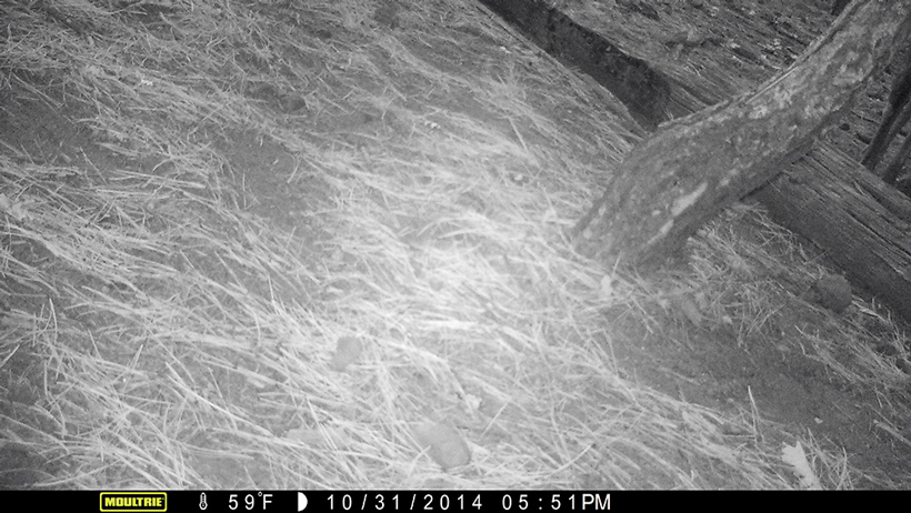 Trail camera on the ground