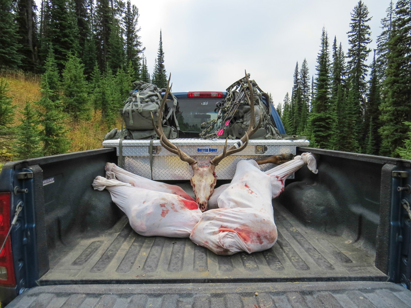 Bull elk meat back at the truck