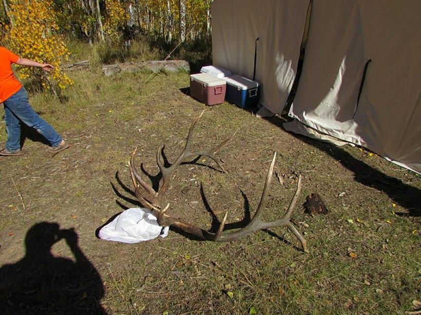 Bull elk rack on the ground