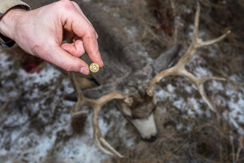 Bullet with mule deer buck