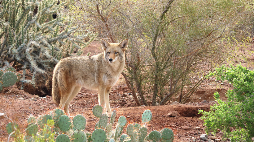 California fur trapping ban